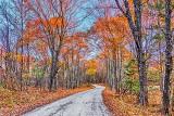 Autumn Back Road P1210009-11