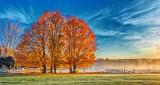 Autumn Trees P1210206-8