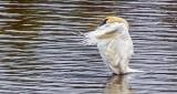 Stretching Swan DSCF5323