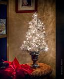 Tiny Christmas Tree P1230253-8