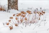 Winter Garden P1230812