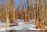 Frozen Swamp P1000926