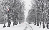 Snowy Gallipeau Centre Driveway P1010308-10