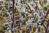 Ice Storm 20160225 (DSCF5901)