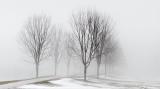 Trees In Fog P1030443-5
