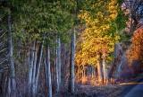 Roadside Trees At Sunrise P1040037-9