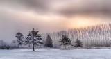 Trees In Foggy Sunrise P1040473-5
