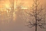 Sunrise Sunrays P1050557-9