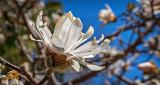 Spring Blossom P1050915
