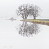 Trees In Fog P1050984