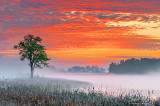 Misty Irish Creek Sunrise P1070291-3