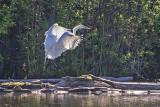 Egret Landing 48554