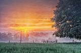 Fence & Tree In Foggy Sunrise P1070366-72