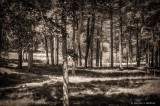 Landscape DSCF14502-4