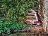 Boat In The Bush DSCF15003-5