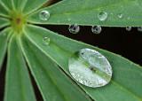 Tiny Droplets P1080686-91