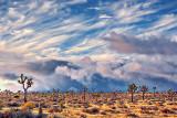 Desert Storm 25829