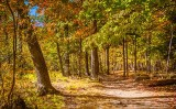Jack Pine Trail DSCF23487-9