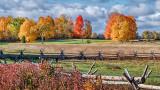 Autumnscape P1140314-6
