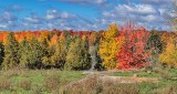 Autumnscape P1140464-8