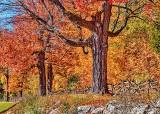 Autumnscape P1140380-2
