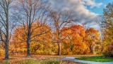Autumn Trees DSCN00191-3
