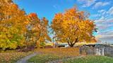Autumnscape DSCN00179-81