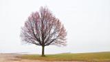 Lone Canalside Tree DSCN00970