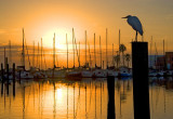Marina Egret at Sunrise 4539