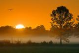 Misty Sunrise 38372