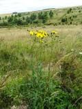 U.K. Chalkland Flora
