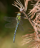 Dragon- and Damselflies 2013
