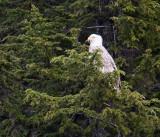 light eagle-0025.jpg
