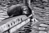 Chillin' on the Docks