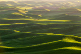 Evening Over the Palouse