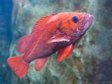 Oregon Coast Aquarium II