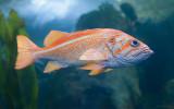 Oregon Coast Aquarium III