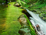 forest glow on seneca creek