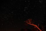 starstreams over the ancient cedars