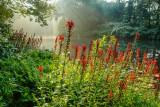misty morning along the loyalhanna