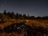 meadow of stars