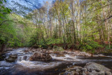 spring morning along the creek