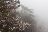 flowers in the fog