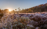 frosty dawn in the high meadow