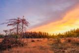 sunrise in the old bog