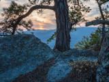 old pine sunset