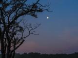 summer morning moon
