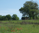 Sod House with Indian Paintbrush