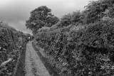 Hedged road