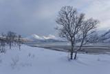 Sandviksletta bay